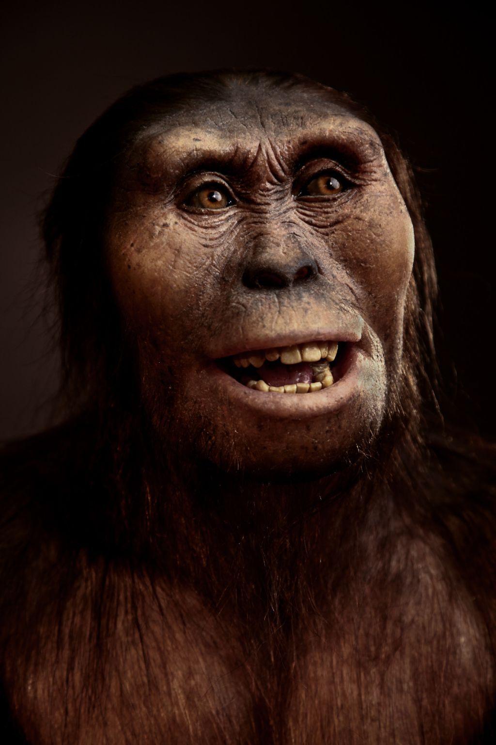 Lucy Australopitecus Afarensis An Extinct Hominid That