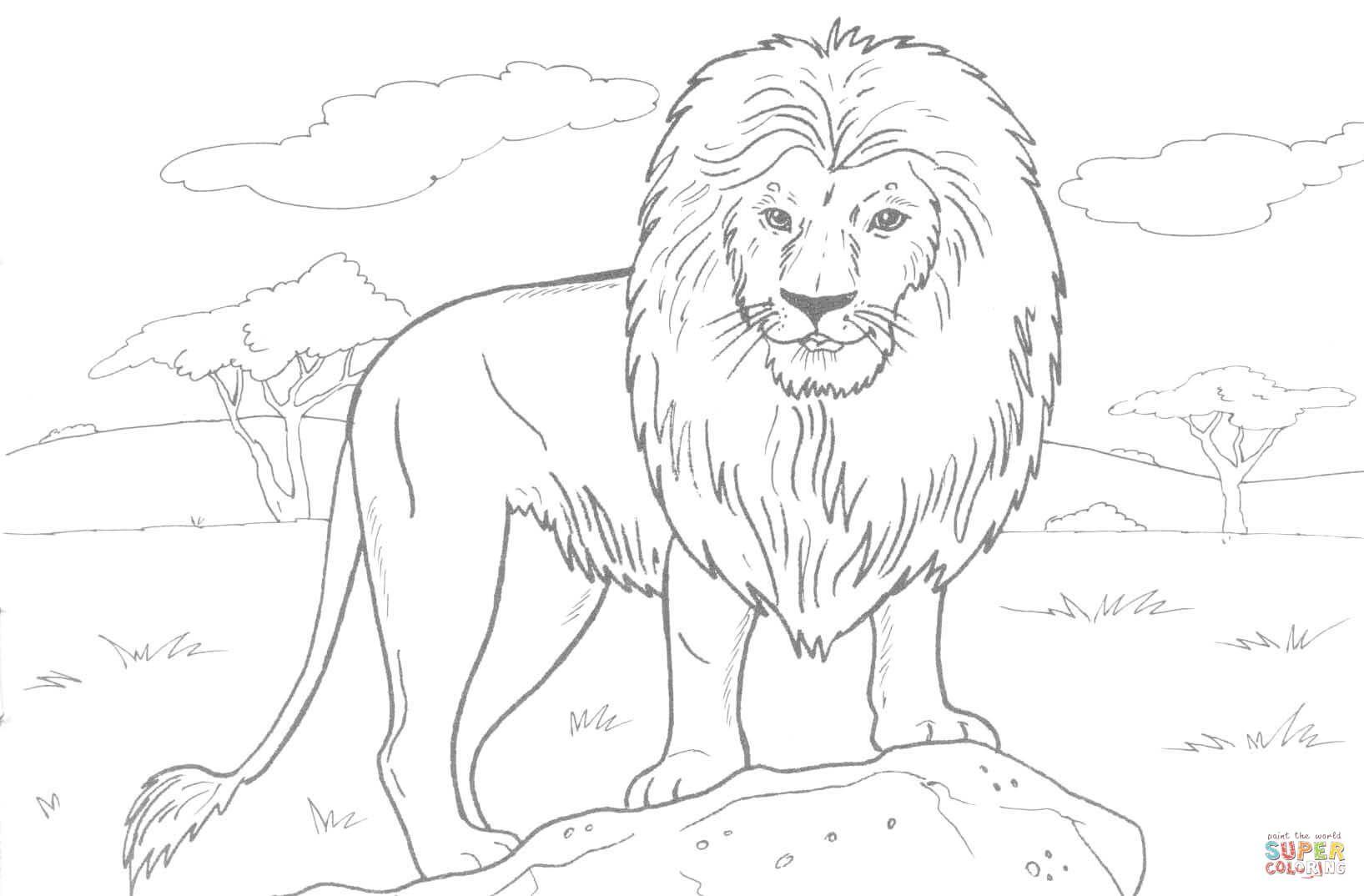 Der Konig Der Lowen Ausmalbild Lowe Tiervorlagen Tiere Zeichnen