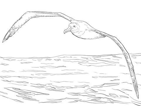 Albatros viajero en vuelo Dibujo para colorear | pájaros y aves ...