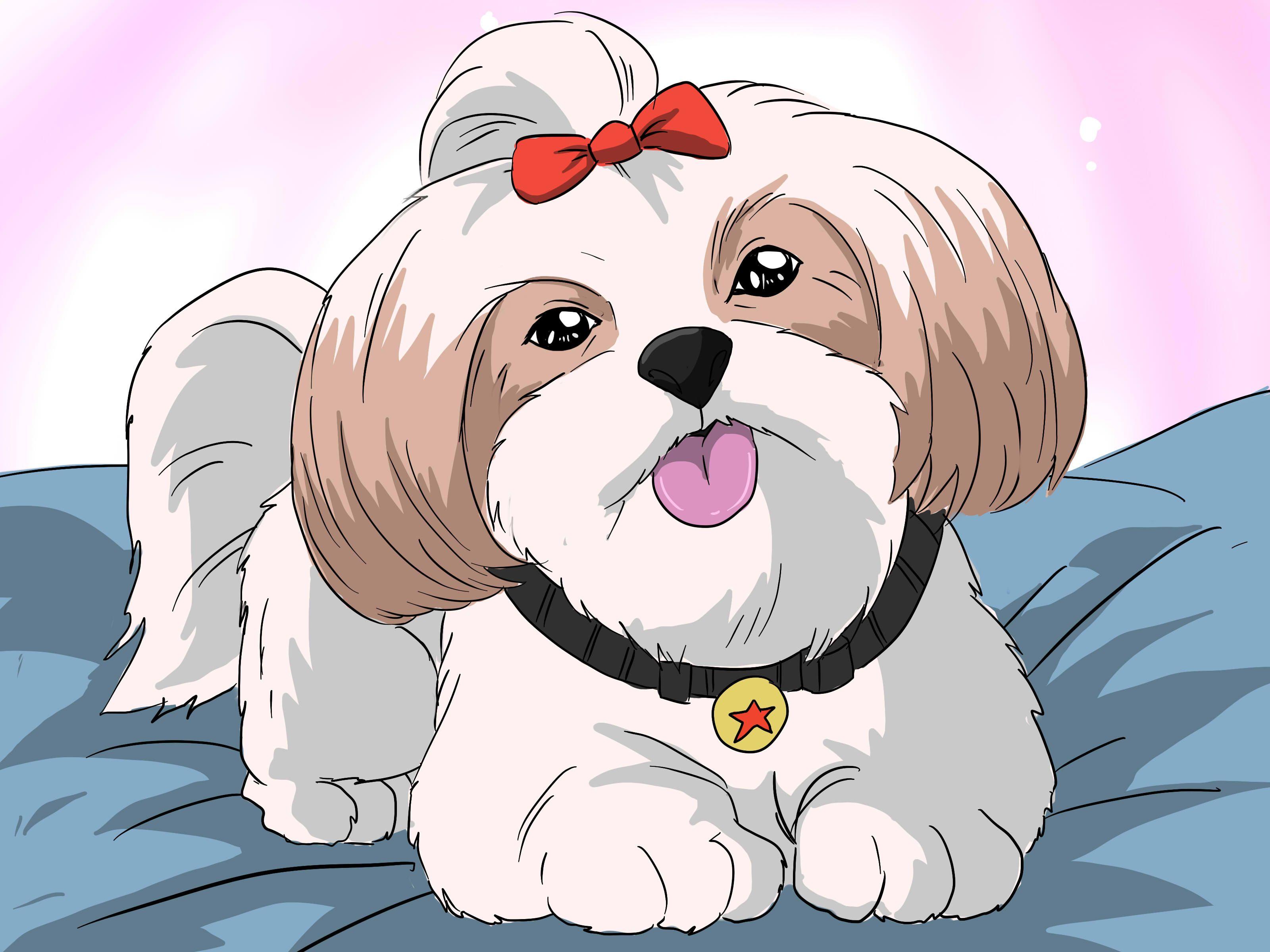 Bathe A Shih Tzu Puppy Shih Tzu Puppy Shih Tzu Puppies