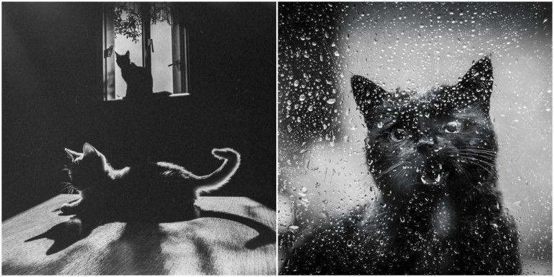 Il existe des millions de photographies de chats mignons sur Internet, humoristiques ou touchantes. Mais bien peu d\\\'entre elles sont artistiques et s\\\'intéressent à capturer la beauté sauvage de ces félins.La vie des chats a quelque chose de mystérieux et de magique pour nous, êtres humains. Voici une sélection de ...