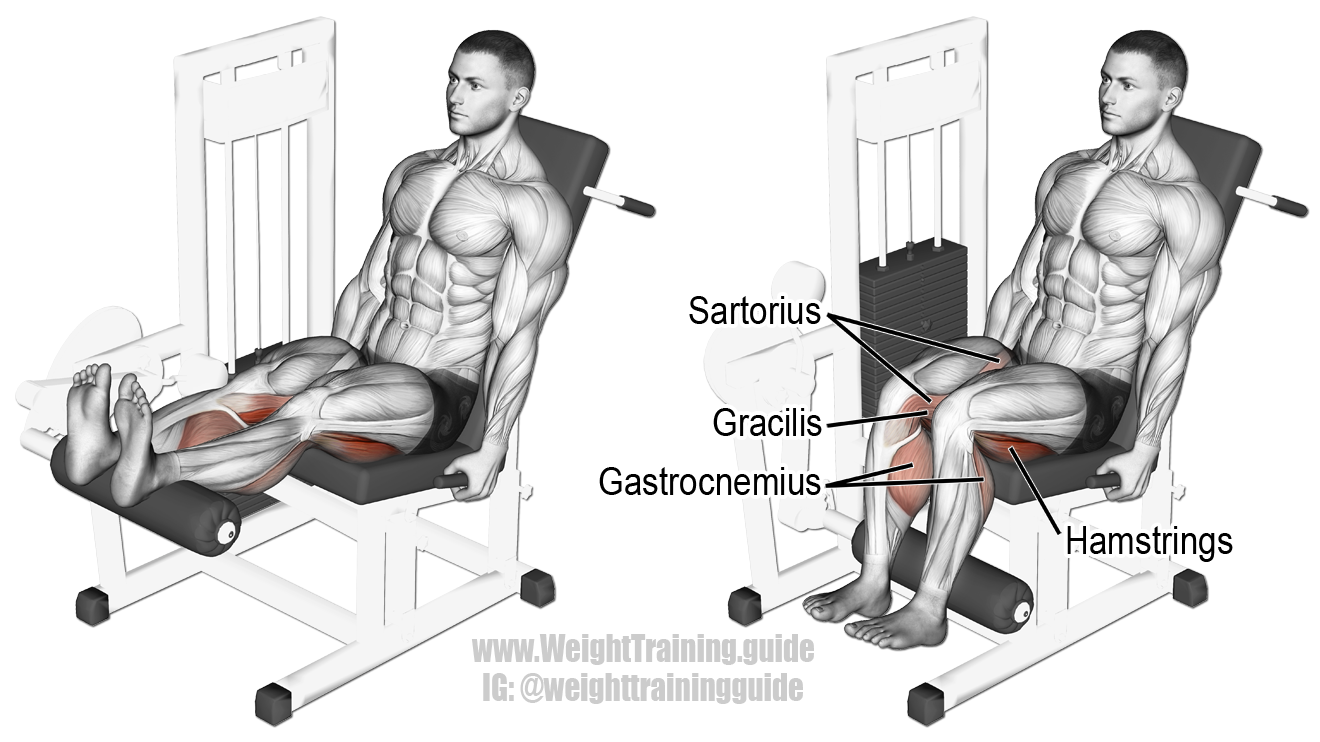 How to Execute a Leg Curl photo