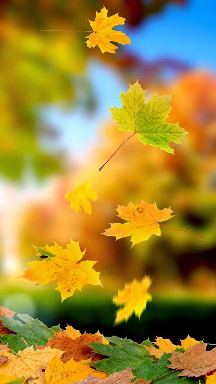 Download Leaves Wallpaper By Honeybee87 47 Free On Zedge Now Browse Millions Of Autumn Leaves Wallpaper Beautiful Nature Wallpaper Photography Wallpaper