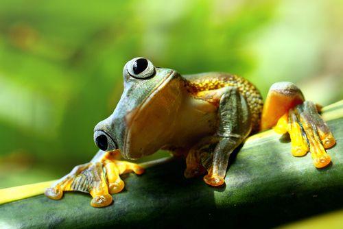 首をかしげるカエルがかわいい