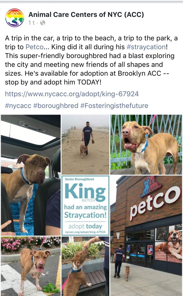 7 9 19 Please Help King Out Of The Dreaded Nyc Acc Before They