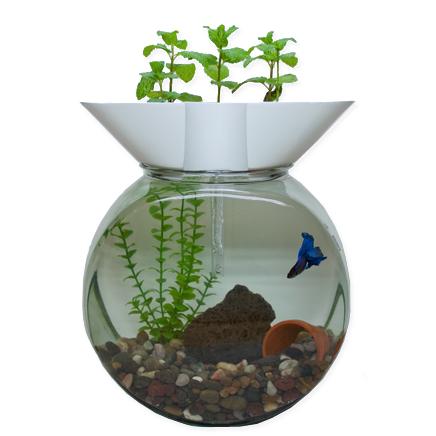 Groponix mini aquaponic system for small aquariums filter for Mini poisson aquarium