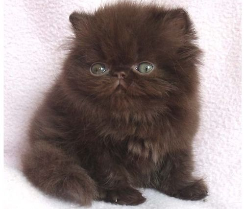 Can Someone Get Me A Derpy Boy Cat I Kinda Want One These Days Kittens Cutest Cute Cats Cute Animals
