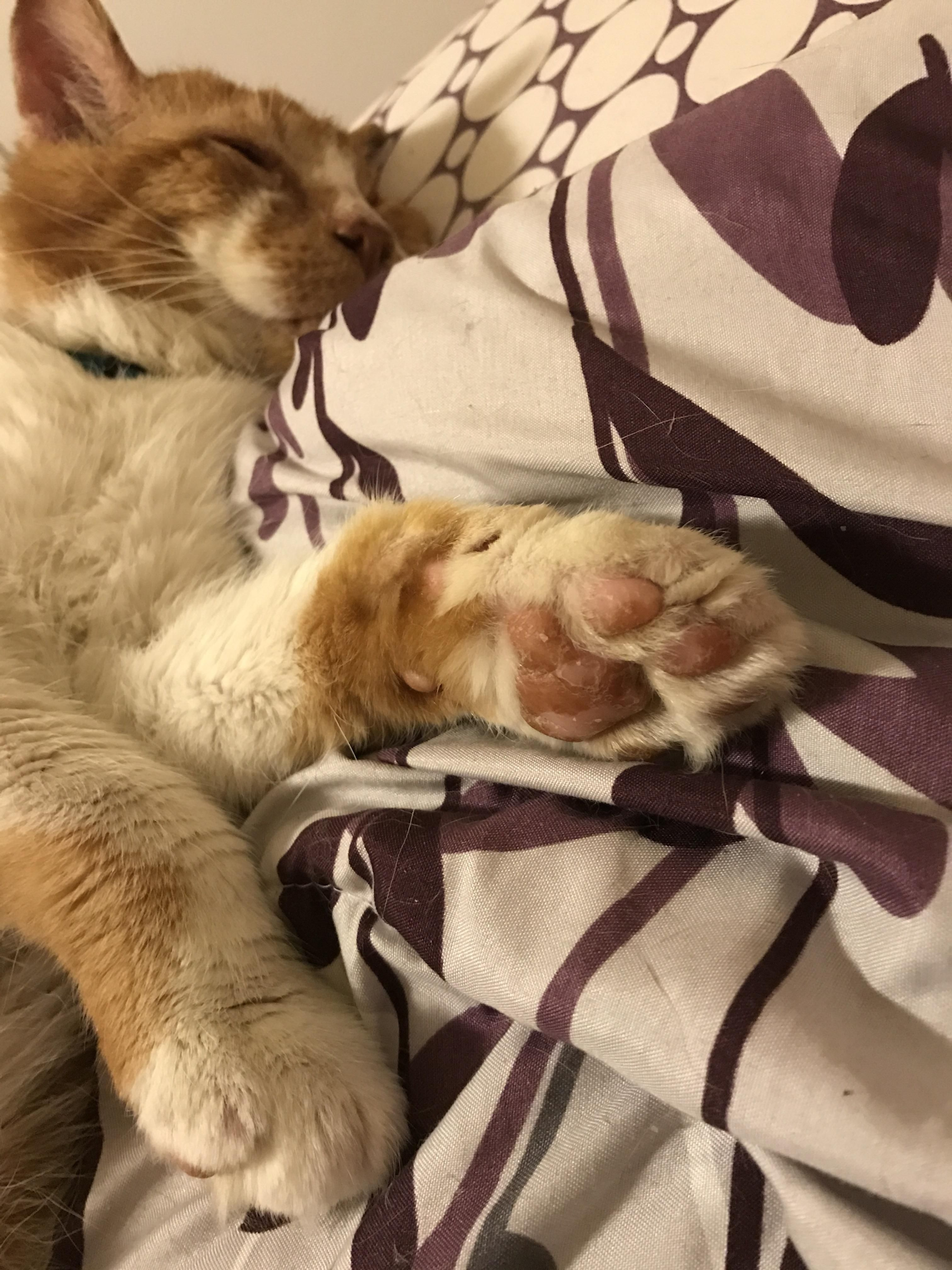 Could I Please Have Recommendations For This Dry Cracked Kitty Paw Cat Paws Paw Kitty