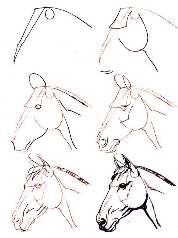 Dessiner un cheval une tete de cheval dessin cheval - Dessiner facilement un cheval ...