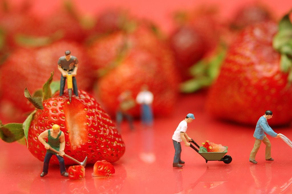 Berry Hard Work   Flickr - Photo Sharing!