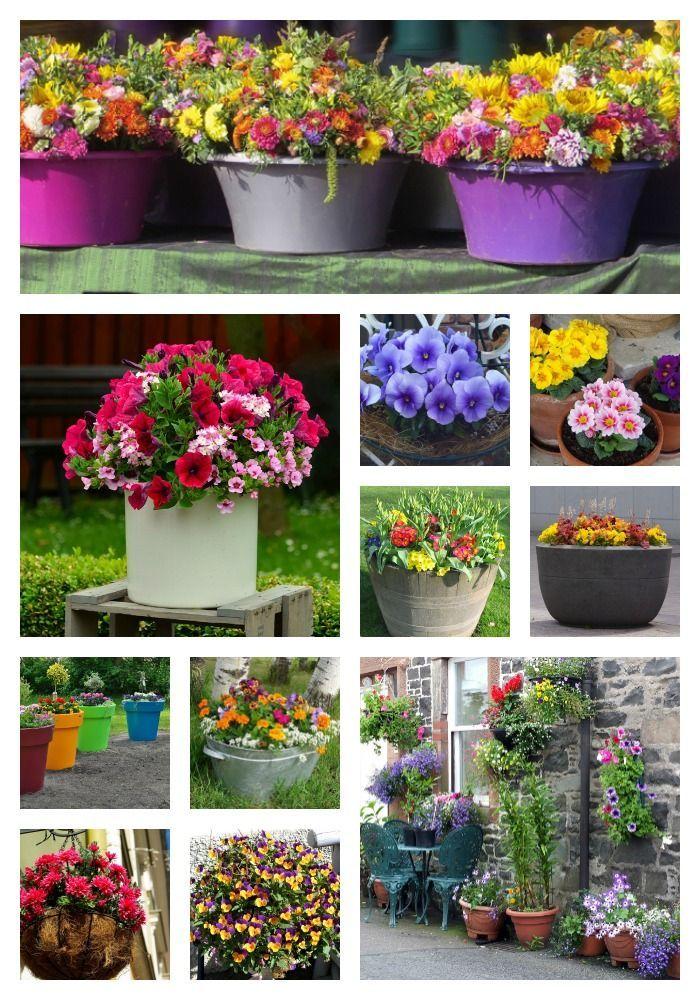 Container Gardening Ideas For Beginners Container garten