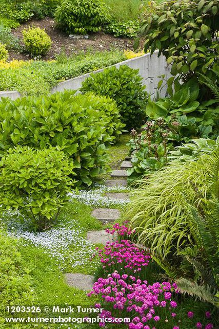 Pin By Venessa Lines On Landscape Design Ideas Northwest Garden Pacific Northwest Garden Garden Planning