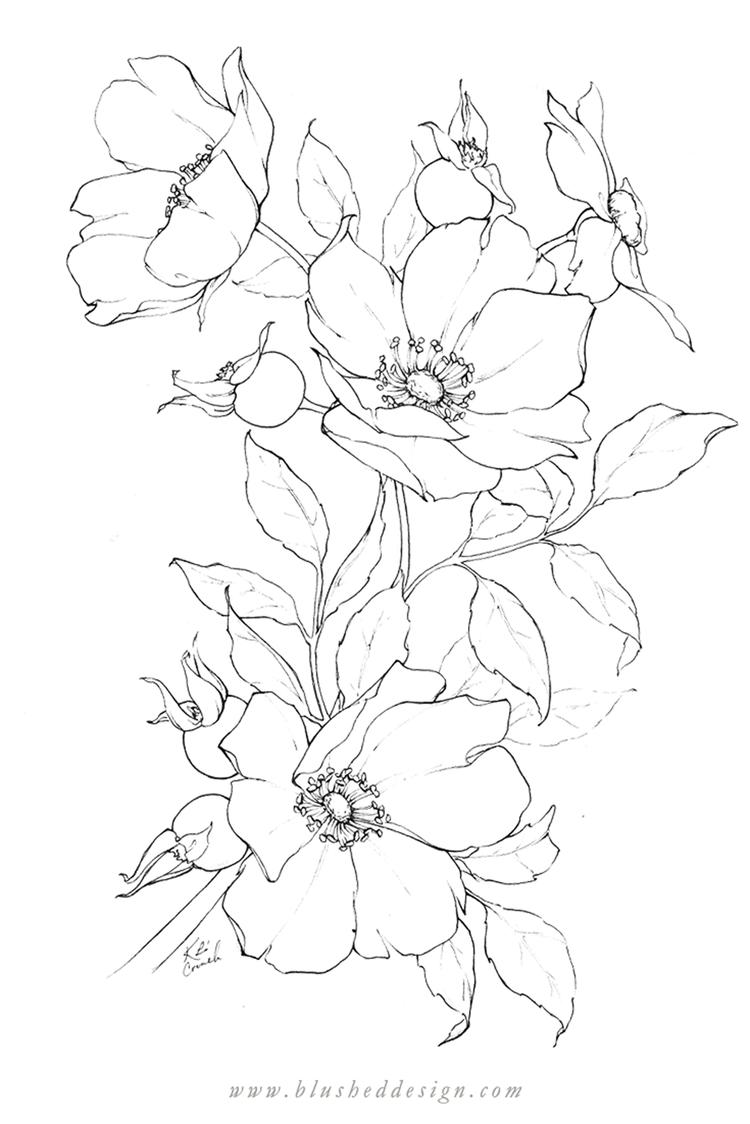 Flower Drawings Spring 2019 Blushed Design Flower Drawing Pencil Drawings Of Flowers Flower Line Drawings