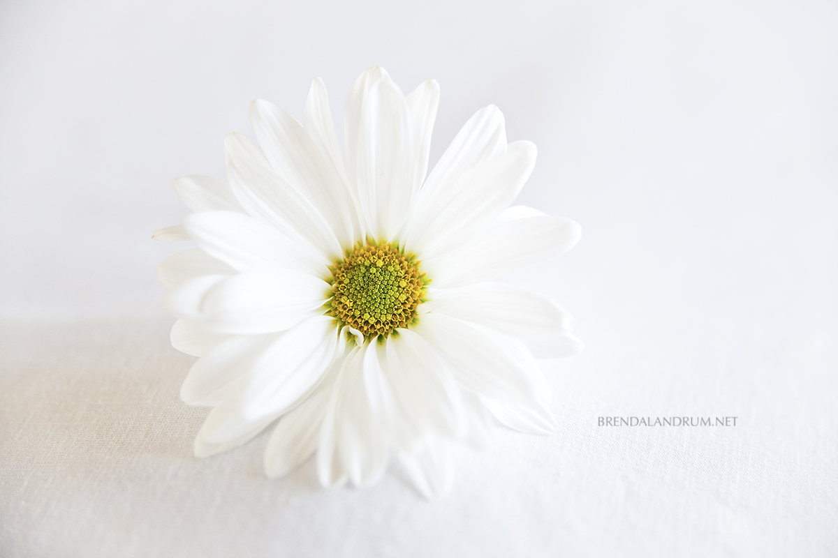 New Image In The Print Shop Small White Flowers Floral Art Still Life Photography