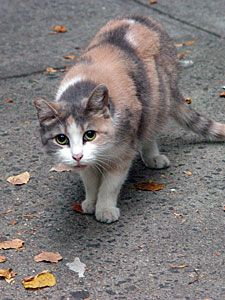 Trap Neuter Return Tnr From The Nyc Feral Cat Initiative Feral