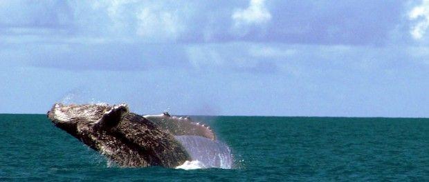 foto: Wikimedia Commons - Fornecido por Viagem em Pauta