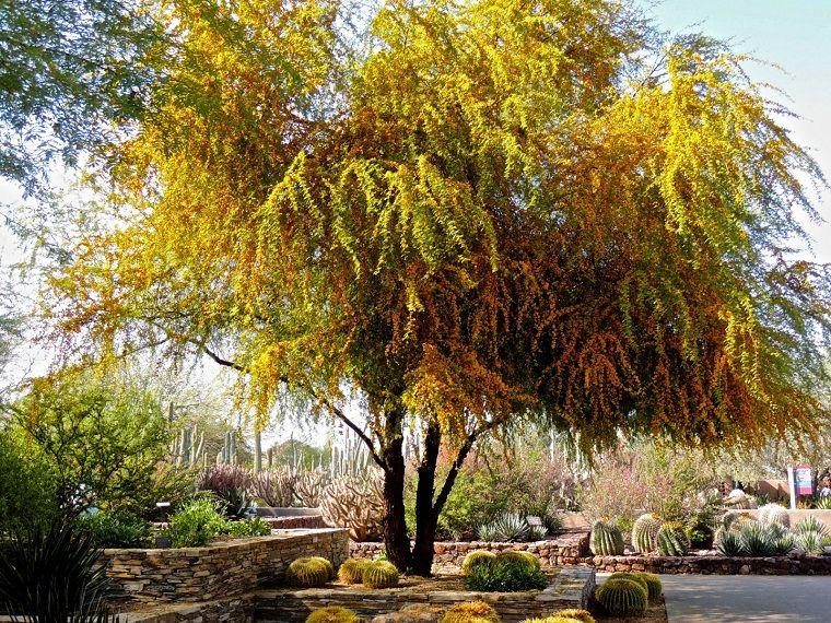 Alberi Crescita Veloce Una Selezione Delle Specie Piu Decorative