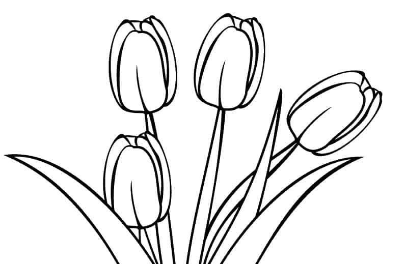 40 Gambar Bunga Tulip Mudah Di 2021 Gambar Bunga Sketsa Bunga Gambar Bunga Mudah