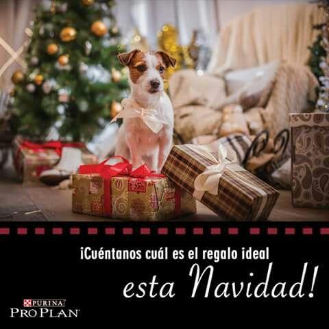 Esta Navidad