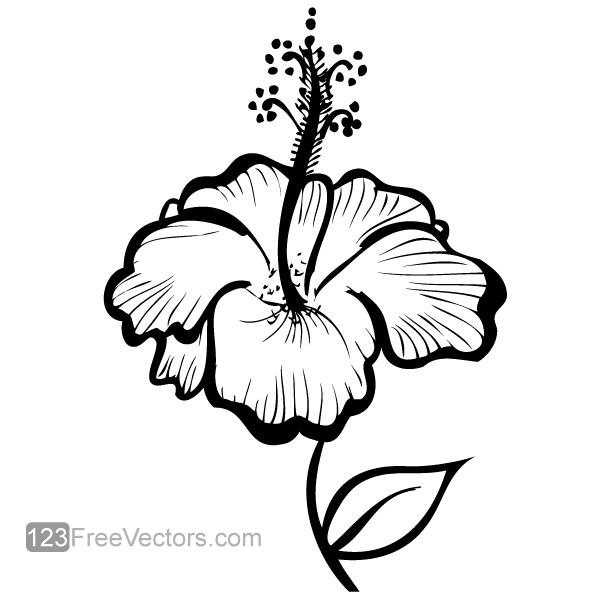 Hand Drawn Hibiscus Flower Vector Download Free Vector Art Vector Free Transparent Flowers Free Vector Art