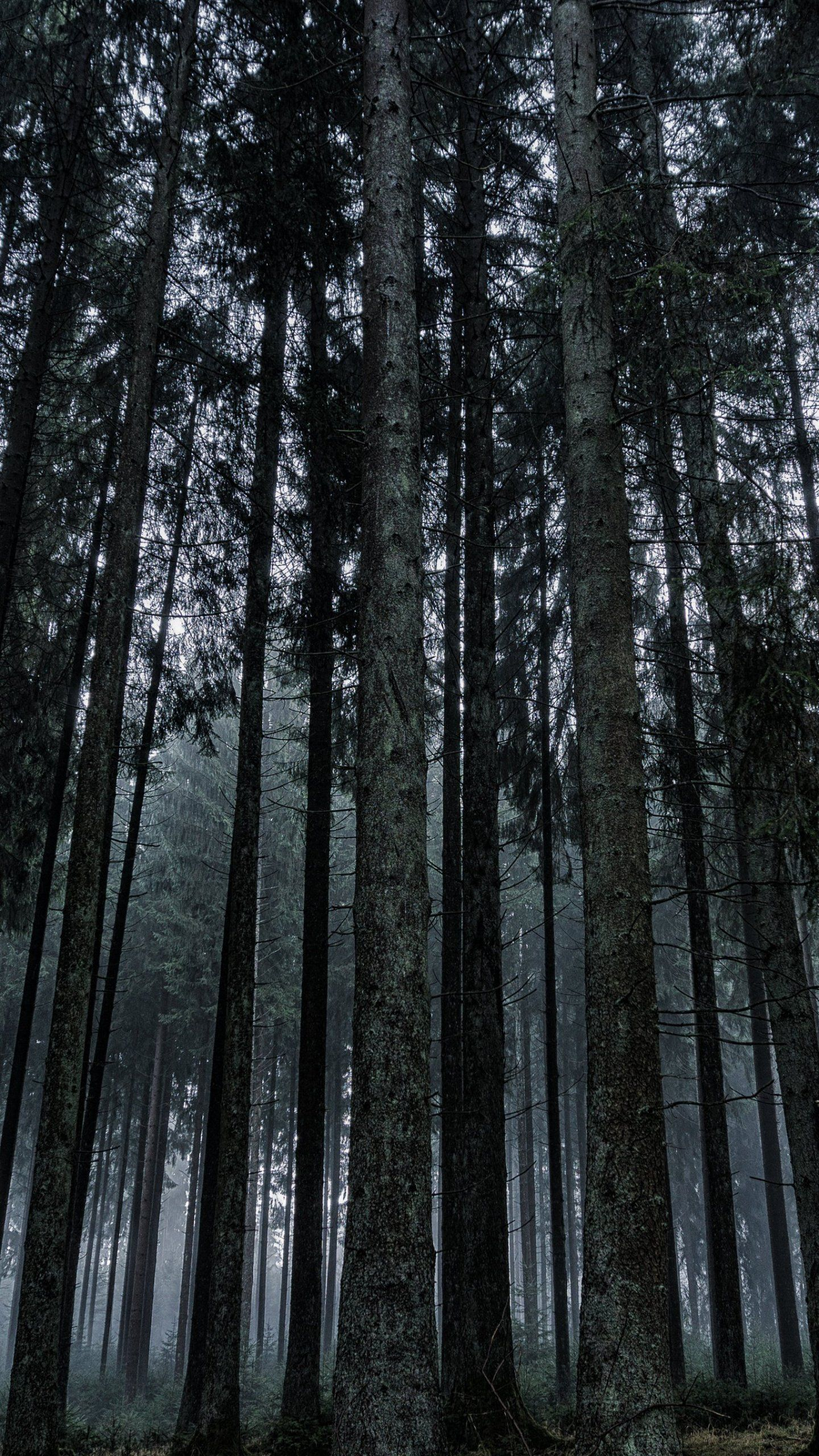 Dark Forest Wallpaper Iphone Android Desktop Backgrounds Forest Wallpaper Beautiful Scenery Pictures Dark Forest