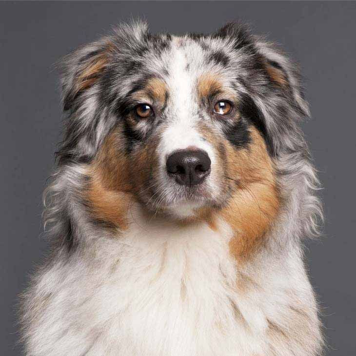 Unique Dog Names Unusual One Of A Kind Ideas Australian