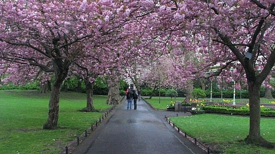 Trees Of Ireland Want To Go There Soo Bad Flowering Trees Nature Tree Beautiful Tree