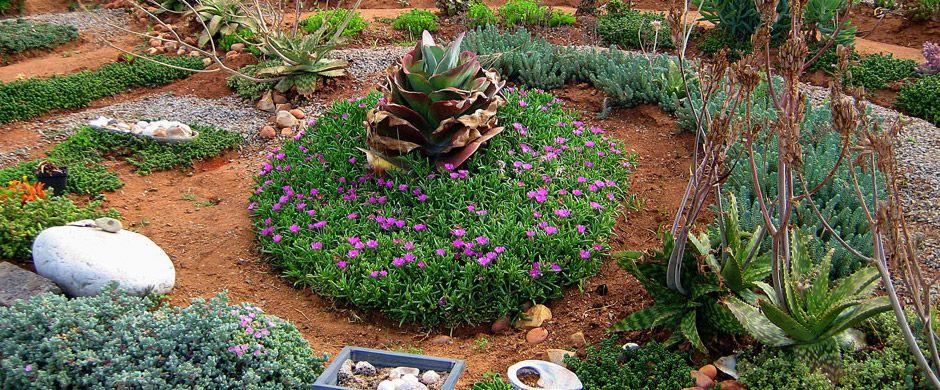 xeriscape palm springs google search mom garden pinterest gardens front yards and garden ideas