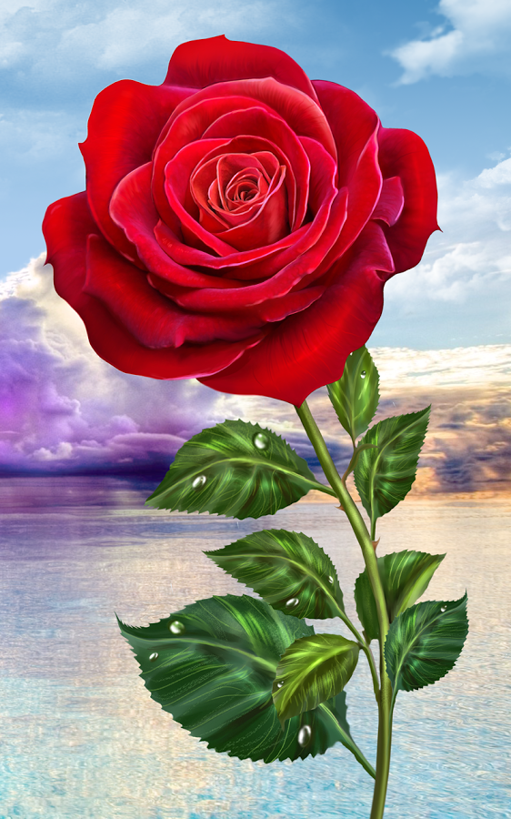 Rose Magic Touch Flowers Android Mobile Analytics And App Store Data Flower Download Rose Flower Wallpaper Beautiful Rose Flowers