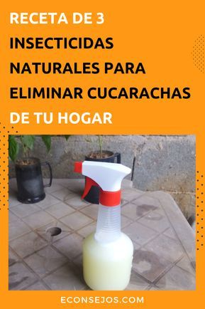 Como Acabar Con La Plaga De Cucarachas Chiquitas Pin En Limpieza