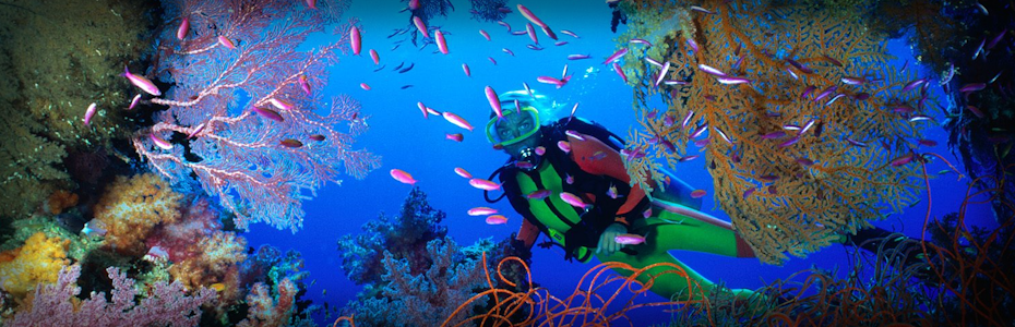 Diving at Ratu Kini Dive Resort