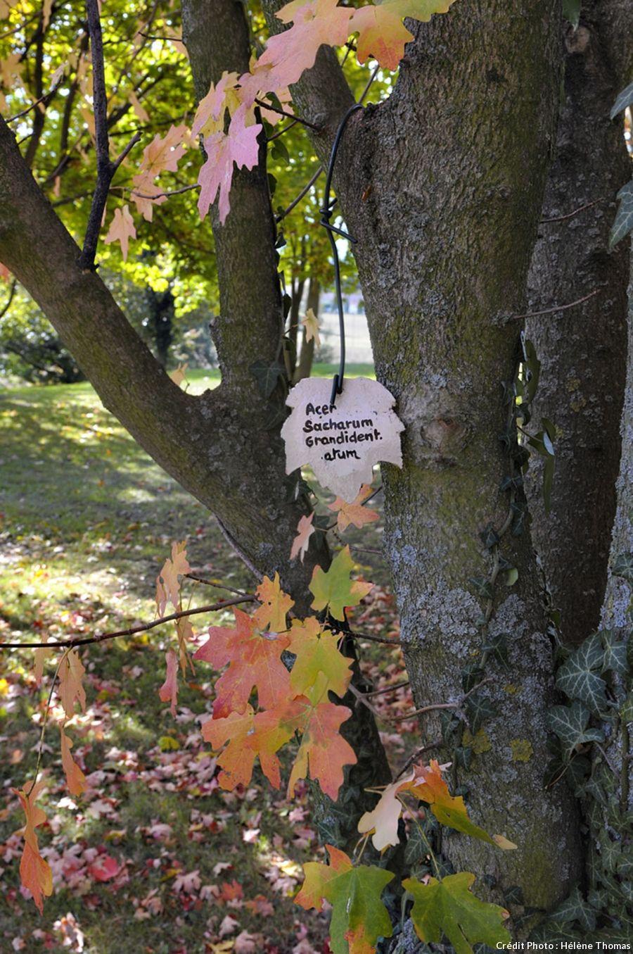 Le jardin du bois marquis dans l 39 is re tiquetage for Les arbres du jardin