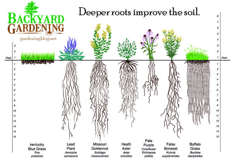 How To Add More Topsoil The Natural Way Backyard Gardening Blog Plants Top Soil Backyard