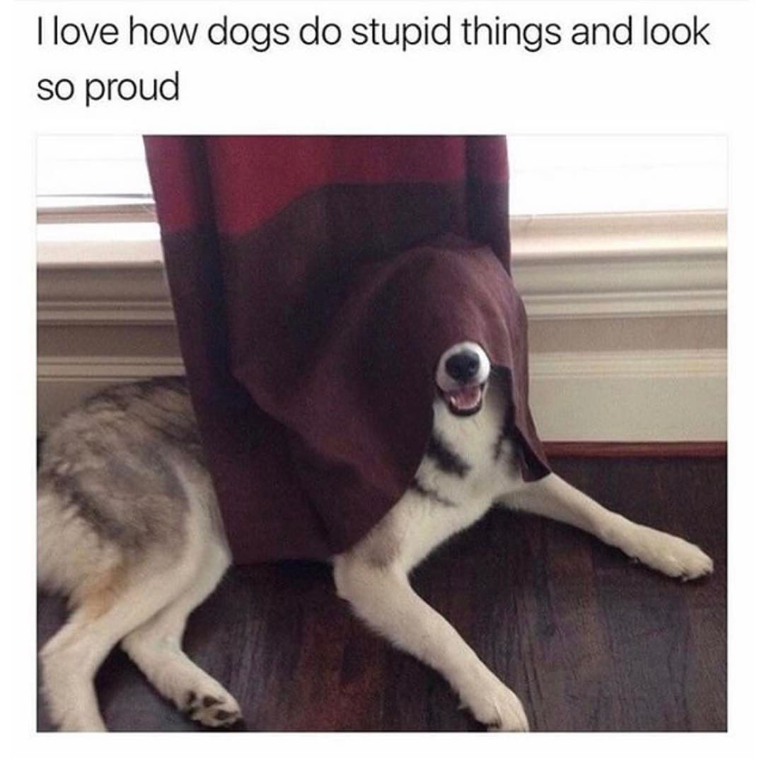 I Love How Dogs Do Stupid Things And Look So Proud Funny Animal