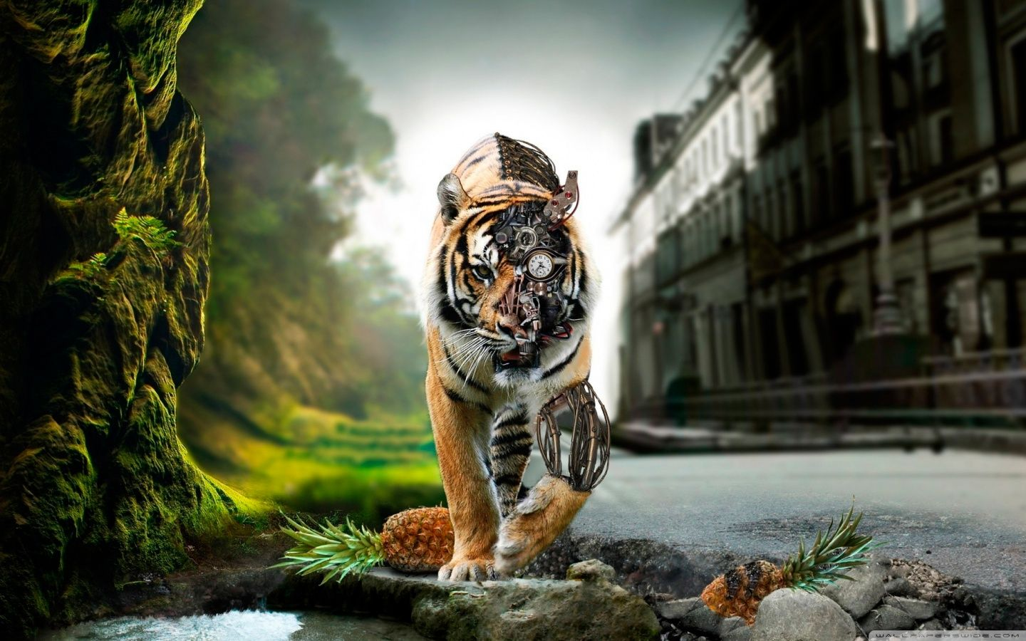 Amazing Wallpapers 1920 1080 Wallpapers Amazing Picture 43 Wallpapers Adorable Wallpapers Tiger Wallpaper Lion Wallpaper Robot Wallpaper
