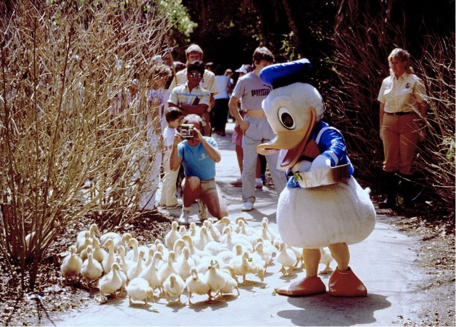 Donald Duck feeding his fans at Fort Wilderness. 1984