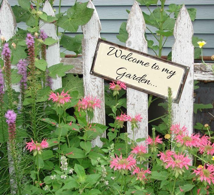 Garden Ideas Zone 6: Perennials Annuals & Bulbs For