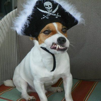 12 Best Halloween Costumes for Jack Russell Terriers | Page
