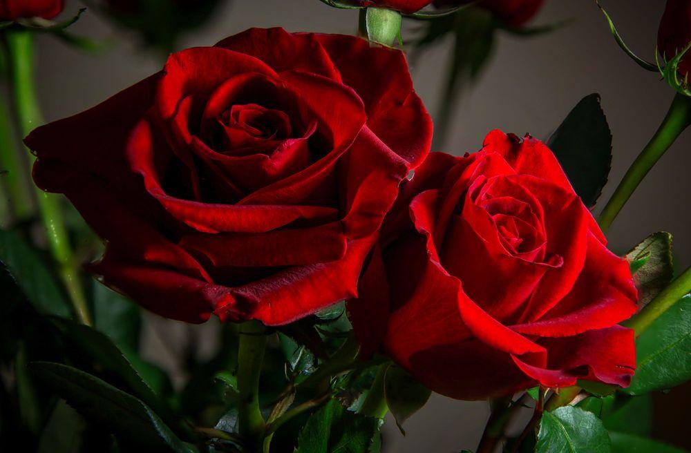 если совместить две красные розы картинки этом случае мало