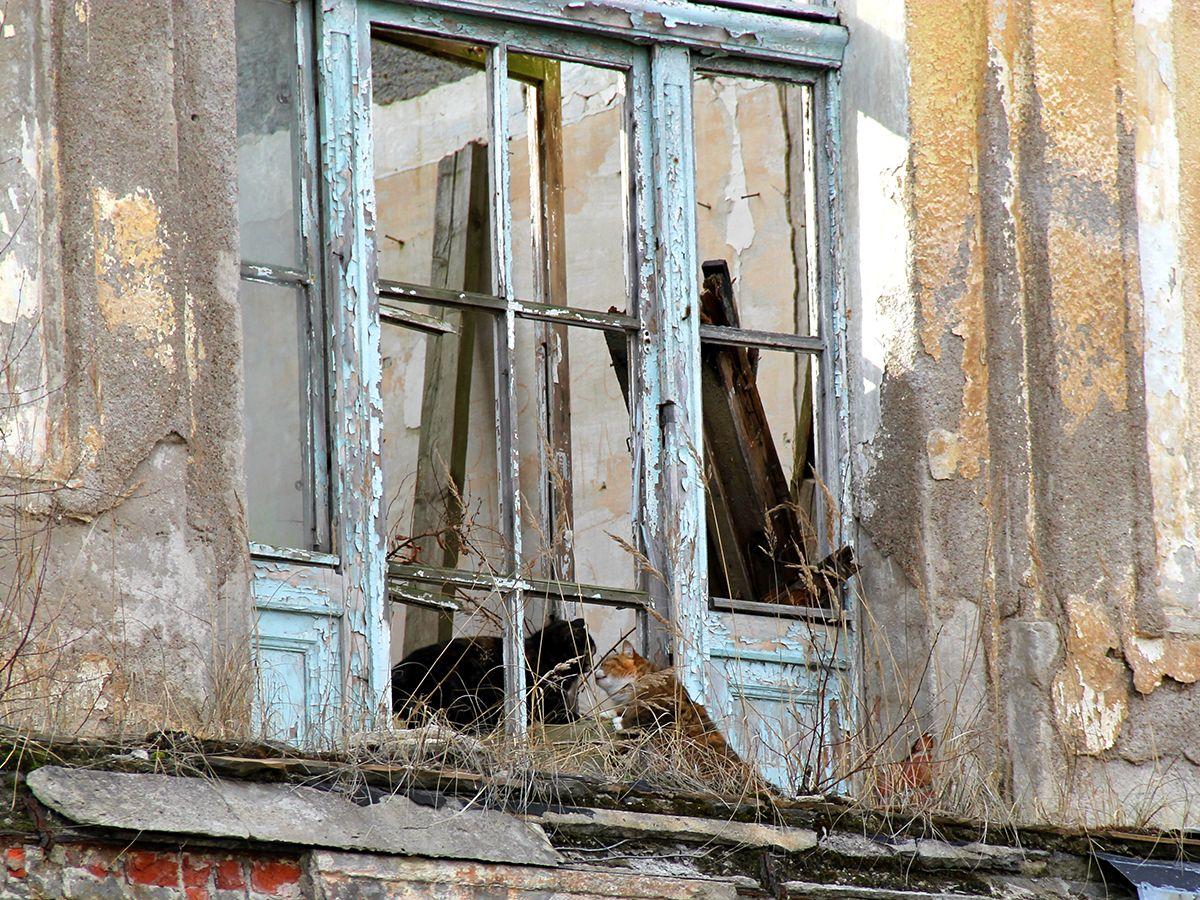 Коты на балконе старого здания