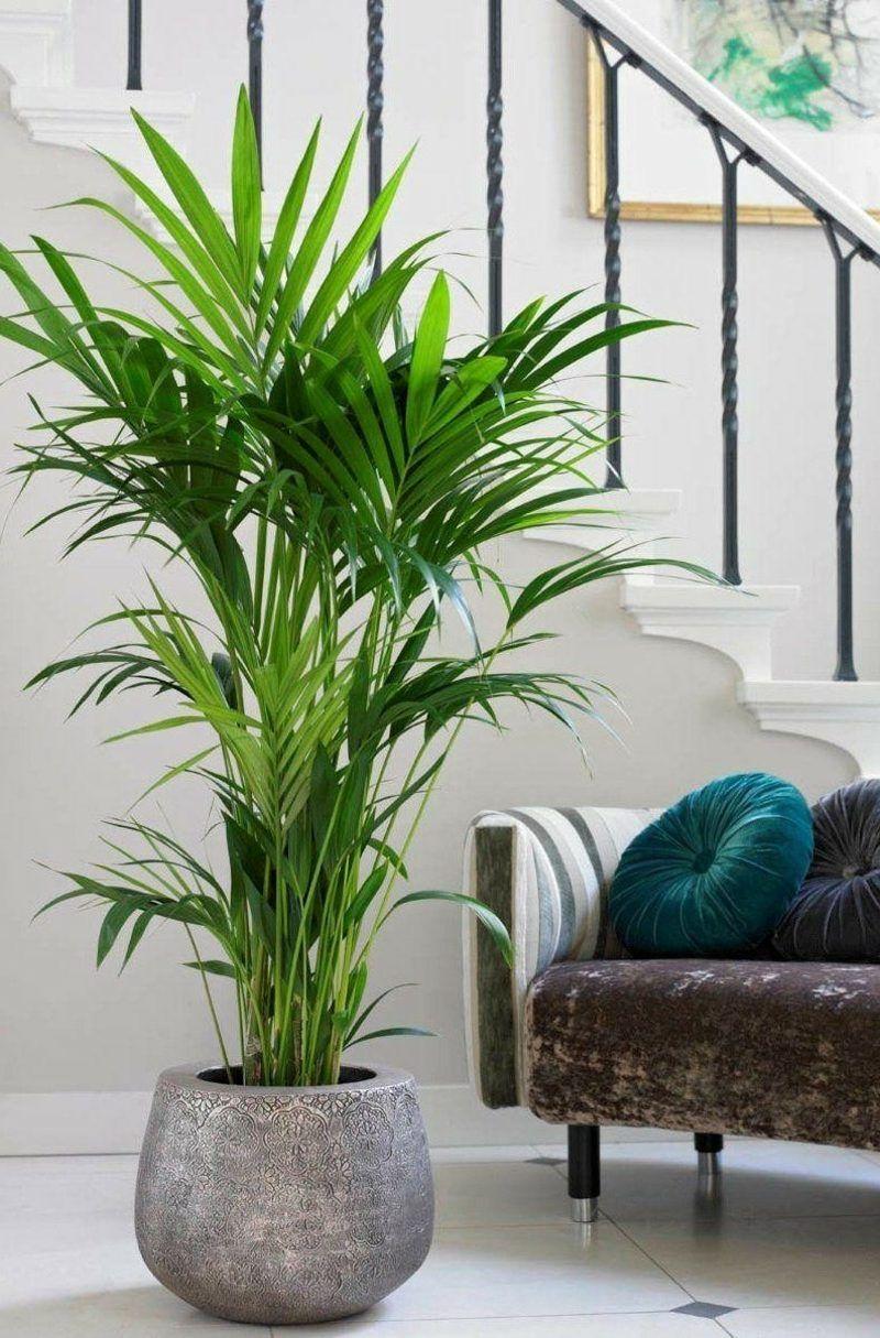 Kentia Palme (con imágenes)  Plantas de interior, Plantas