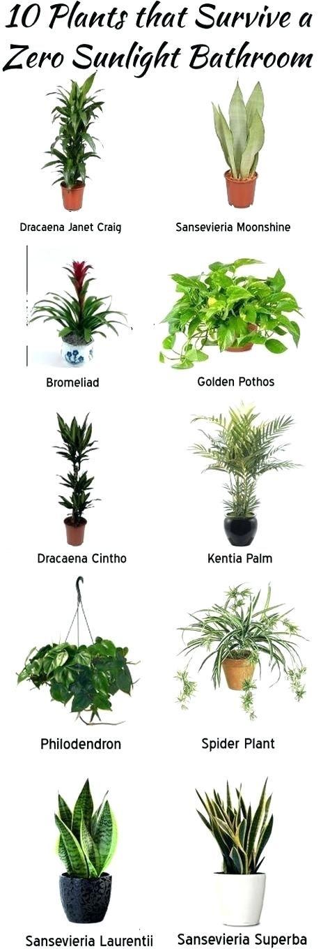 Ordinaire Office Plants No Windows Best Plants For The Bathroom Best Indoor Plants  For Office With No Windows