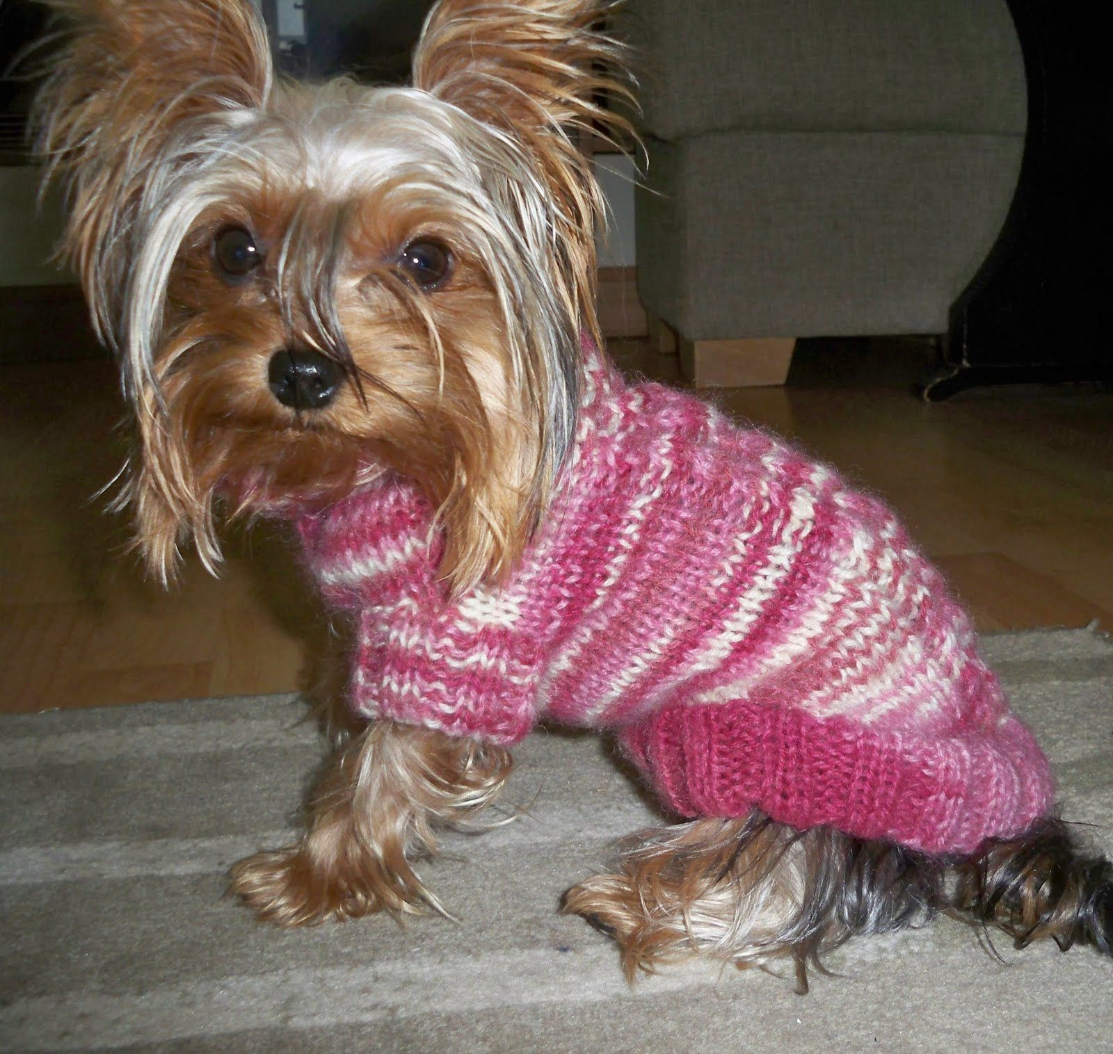My daughter's friend has a mini Yorkshire terrier, who finds autumn and winter temperatures very disagreeable. Lizzy (the dog) is a very sm... #dogcrochetedsweaters