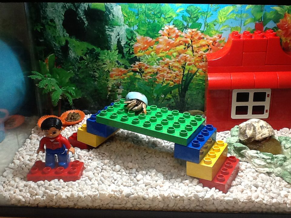 Plastic Building Blocks for hermit crabs
