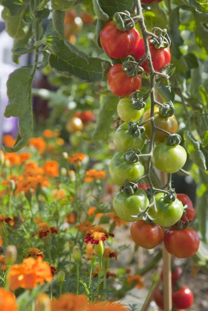 gartenpflanzen sommerblumen gartentipps gartendeko