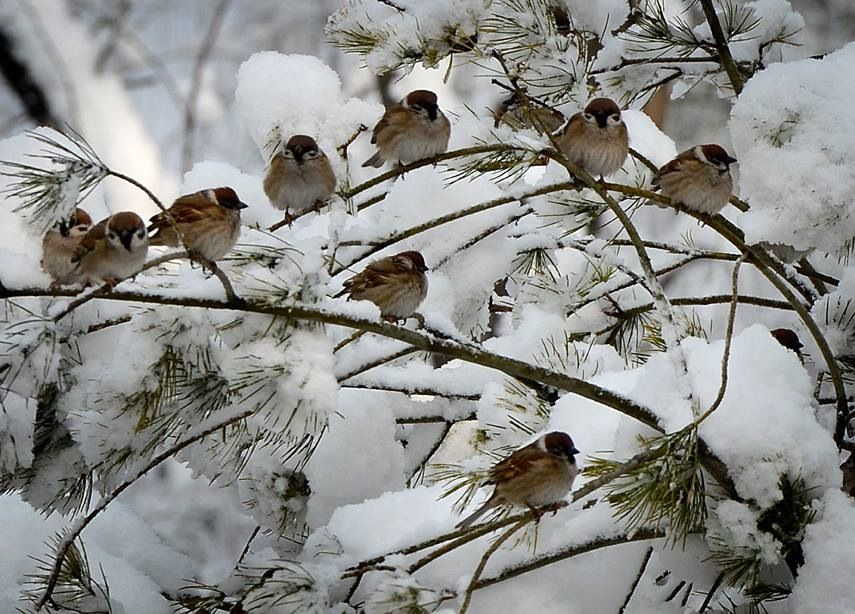 Birds of a feather ... Japan