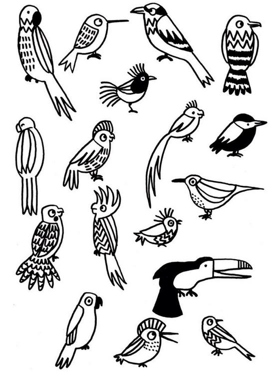 Eva Mouton Vogeltjes Vogels Tekenen Vogels Dieren Tekenen