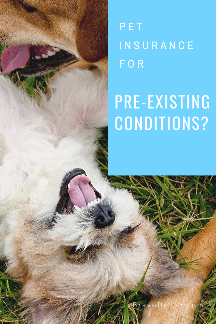Pet Insurance For Pre Existing Conditions Pet Insurance Pets Best Pet Insurance