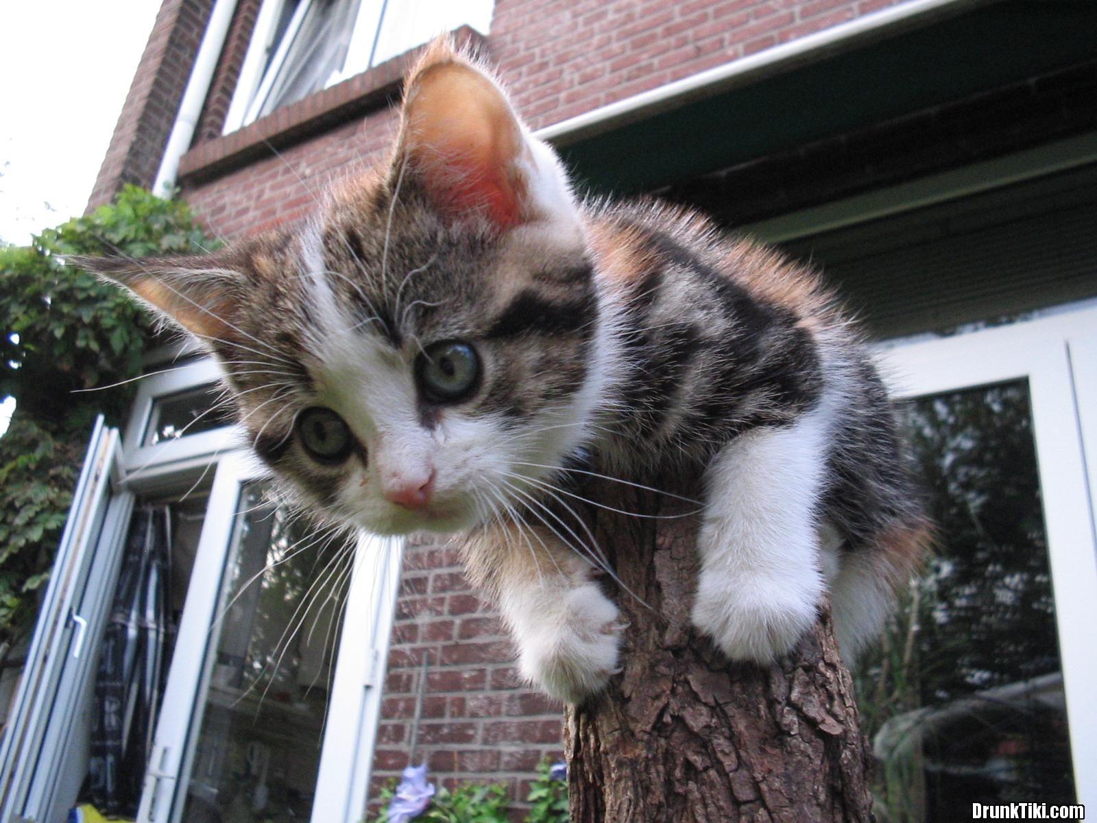 Котенок. #Kitten #Kittens #Cat #Cats