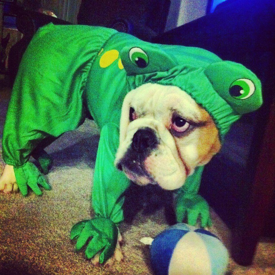 Halloween Frog :) For My Friend Laurel Burns!